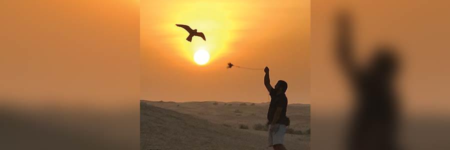 Feeding a Falcon